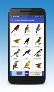 Canto de Pássaros Brasileiros 1
