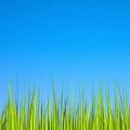 Grass Live Wallpaper [Revamped]